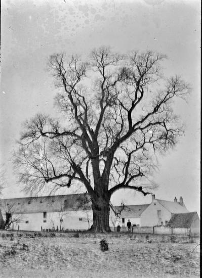 1899 tgf 018