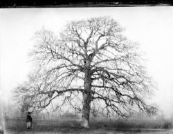 1899 tgf 026