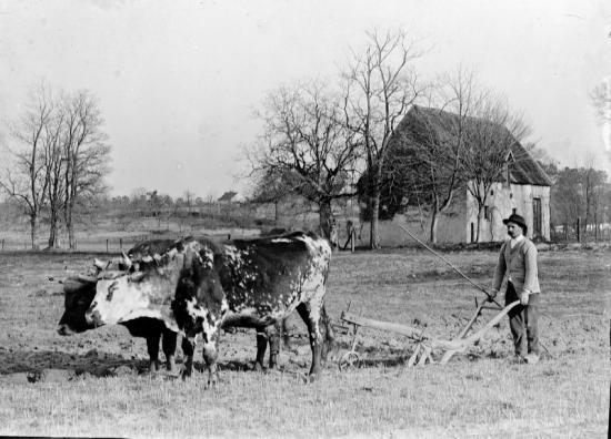 1899 tgf 041