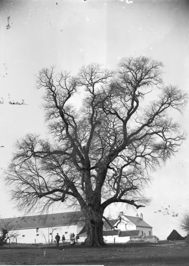 1900 ttgf 118 1 1