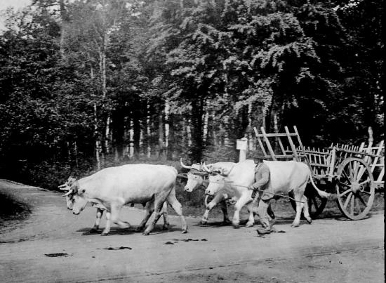 1905 a022
