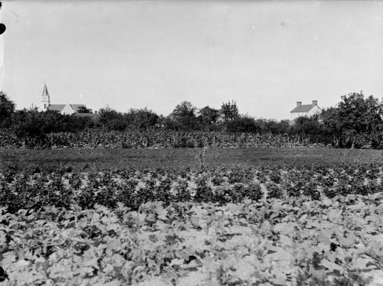1907 tgf 113 1